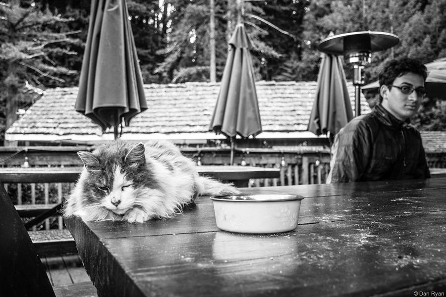 Alice's Restaurant cat... Woodside, California, April 2019